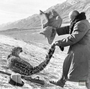 Abb. 2: Die Jagd nach Schneeleoparden in der Kirgisischen SSR. Foto: Eduard Wilczynski. Archiv der historischen Fotos RIA, 1966.
